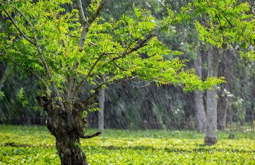 Kaziranga Rains
