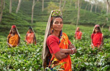 Assam Tea Workers