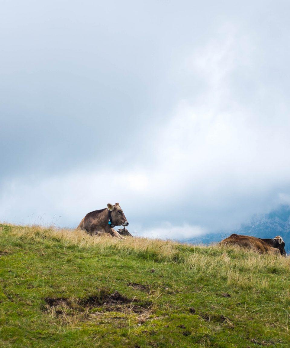 Mechuka grasslands