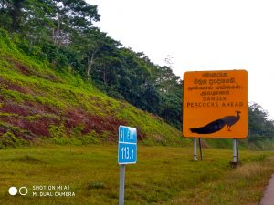 self drive guide to Sri lanka