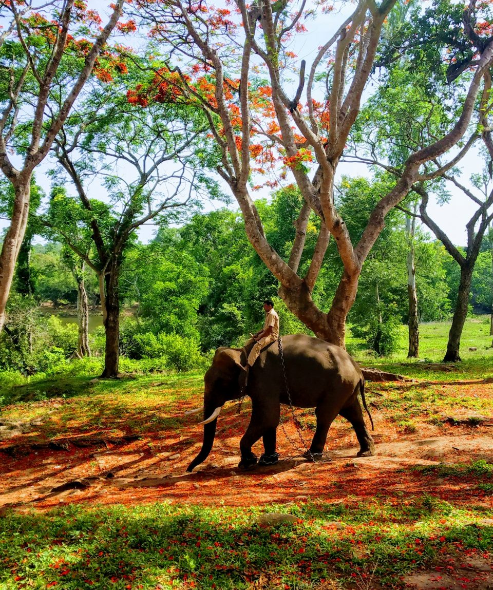 Coorg and Ooty Tour